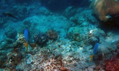 Fotos bajo el mar
